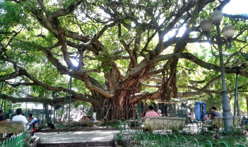 Passeios em Florianópolis: Praça XV de Novembro