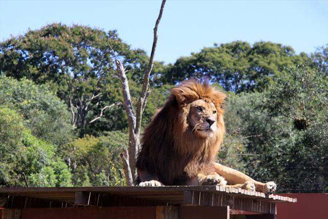 Passeios em Curitiba: Zoológico