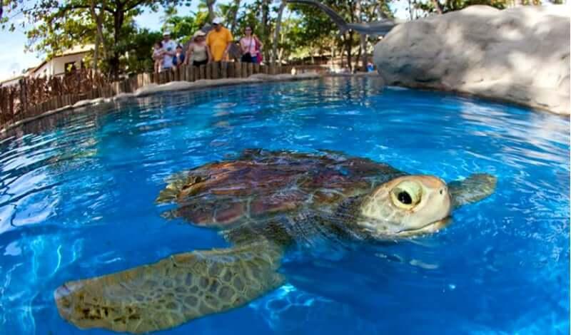 Projeto TAMAR em Florianópolis: Tartaruga no tanque