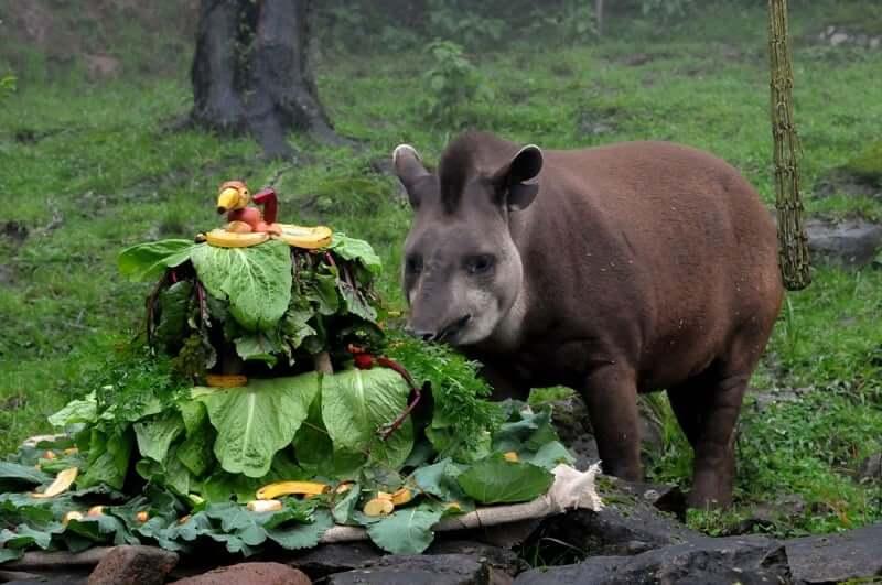 O que fazer à noite em Gramado: Gramado Zoo