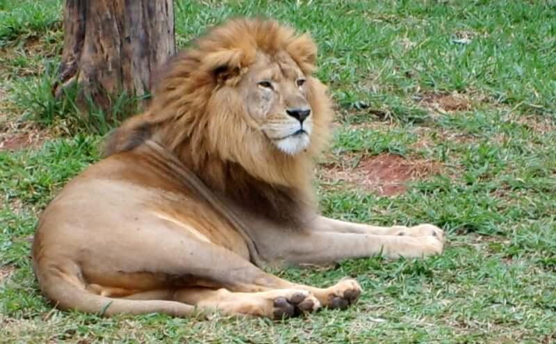 O que fazer com as crianças em Belo Horizonte: Jardim Zoológico