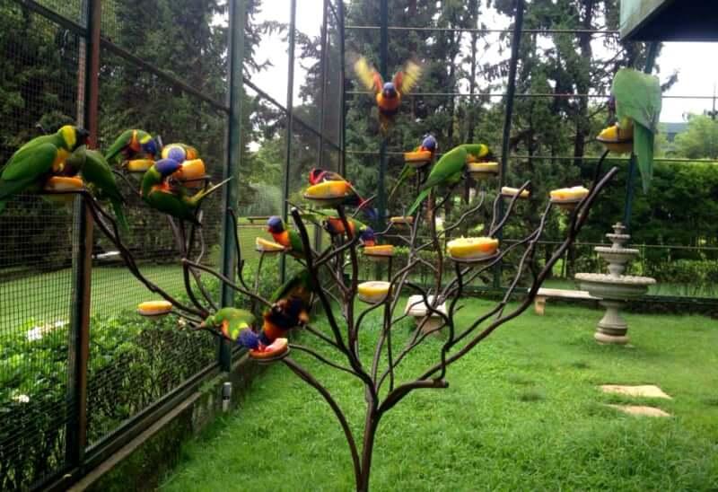 O que fazer com as crianças em Belo Horizonte: Mini Zoo do Vale Verde