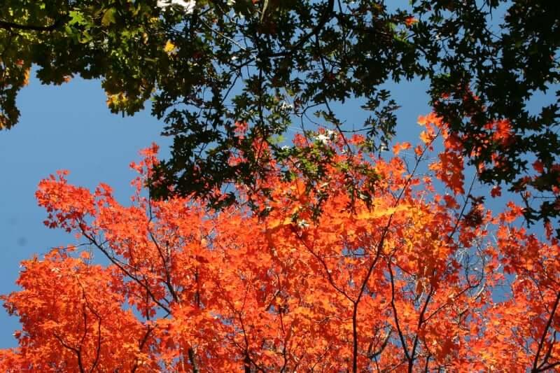 Clima e Temperatura em Belo Horizonte: Outono em Belo Horizonte