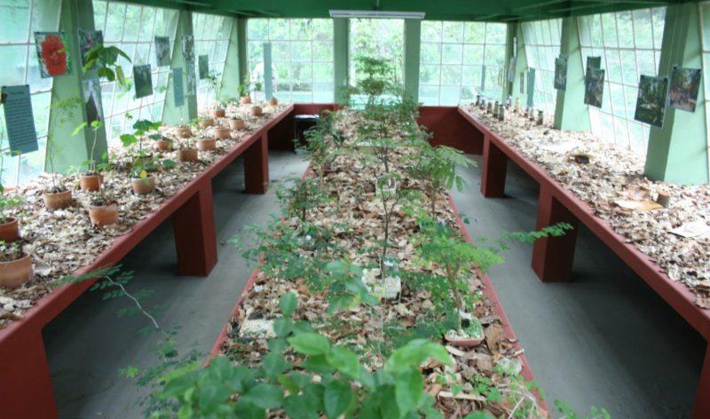 Museu de História Natural da UFMG em Belo Horizonte: Jardim sensorial