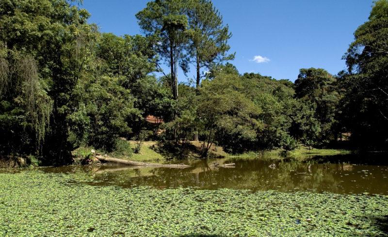 Museu de História Natural da UFMG em Belo Horizonte: Áreas do Horto Florestal