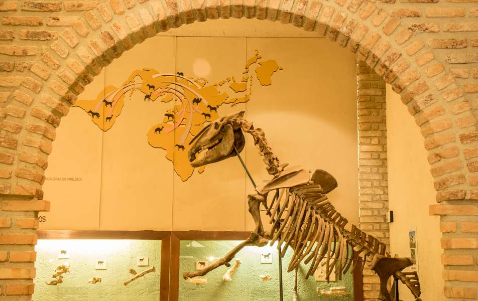 Museu de História Natural da UFMG em Belo Horizonte: Como chegar